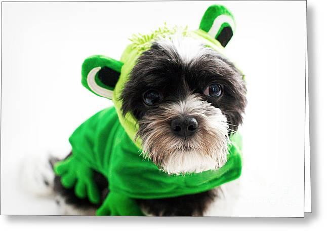 Dog Photographs Greeting Cards - Ribbitt ribbitt Greeting Card by Kim Fearheiley