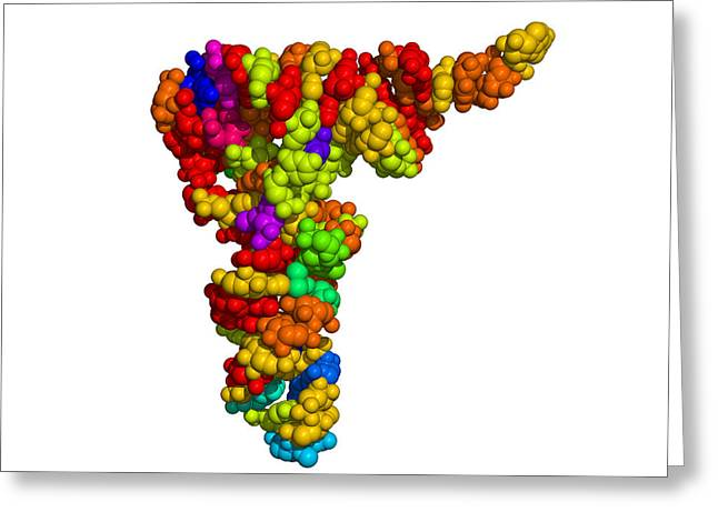 Nucleic Acid Synthesis Greeting Cards - Ribosomal Rna Greeting Card by Dr Tim Evans