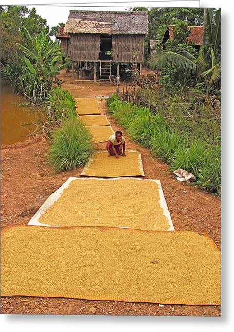 People Greeting Cards - Rice Grains Drying Greeting Card by Bjorn Svensson