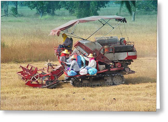 Stopped From Time Greeting Cards - Rice Harvest Greeting Card by Judith Birtman