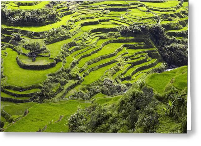 Rice Terraces In Banaue Greeting Card by Skip Nall
