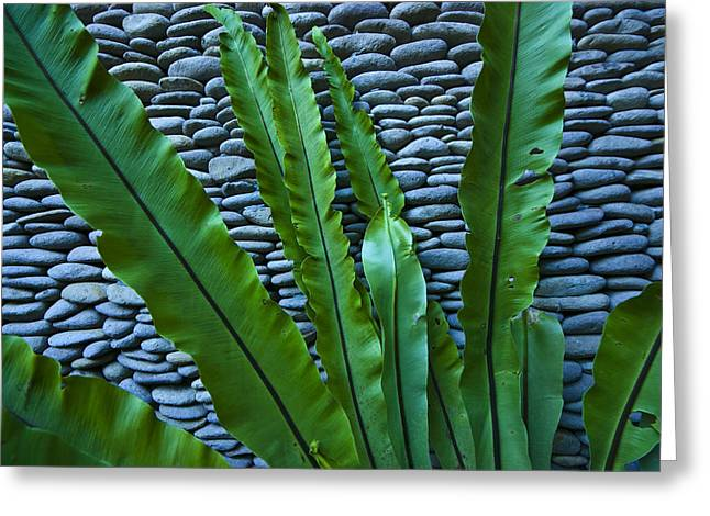 Rich Green Fern Leaves Against A Wall Greeting Card by Jason Edwards