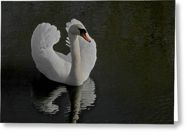 White Swan Greeting Cards - Ride A White Swan Greeting Card by Odd Jeppesen