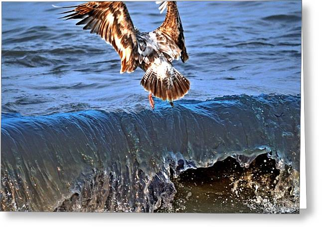 Riding The Wave  Greeting Card by Debra  Miller