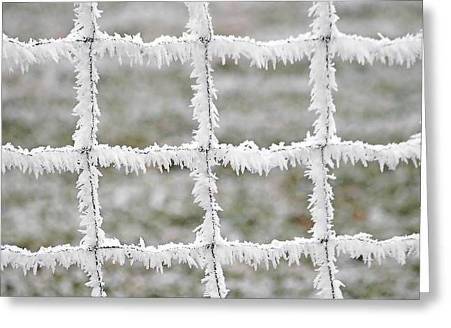 Snow White Greeting Cards - Rime covered fence Greeting Card by Christine Till
