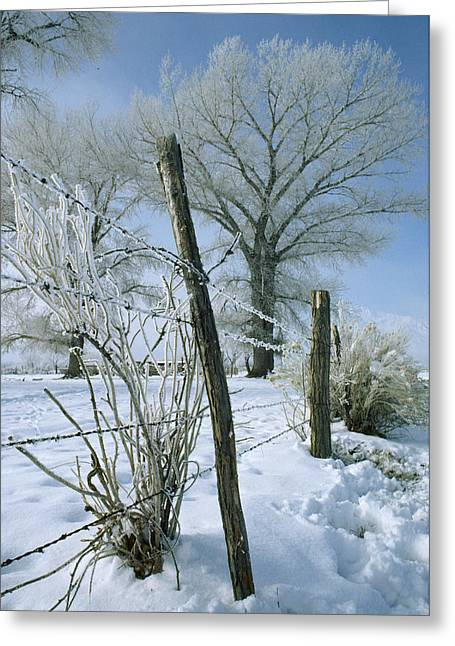 Rime From Rare Fog Coats Fence Greeting Card by Gordon Wiltsie