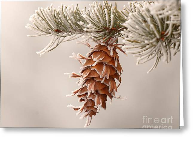 Spruce Cone Greeting Cards - Rime Ice Lightly Clinging To Spruce Cone Greeting Card by Max Allen