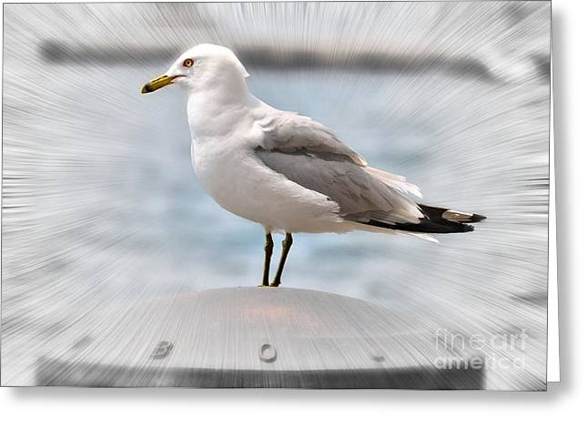 Seabirds Mixed Media Greeting Cards - Ring Billed Gull  Greeting Card by Elaine Manley