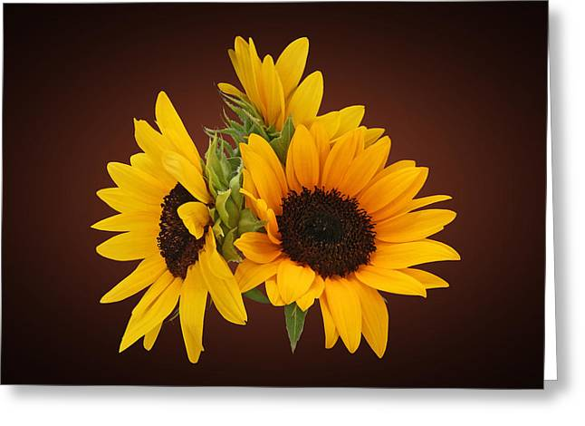 Sunflower Greeting Cards - Ring of Sunflowers Greeting Card by Susan Savad