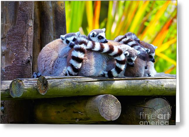 Ring-tailed Lemurs Greeting Card by Gabriela Insuratelu