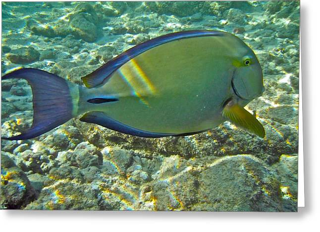 Surgeonfish Greeting Cards - Ringtail Surgeonfish Greeting Card by Michael Peychich