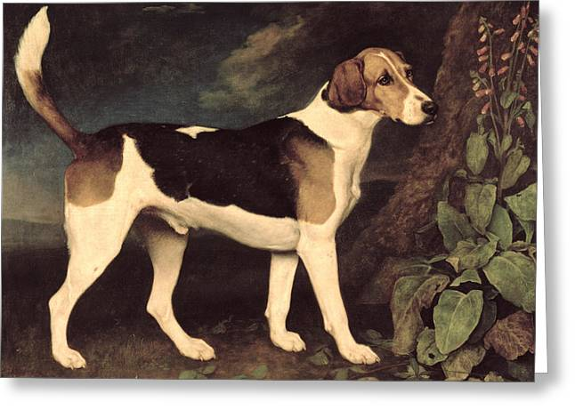 Hound Hounds Greeting Cards - Ringwood Greeting Card by George Stubbs
