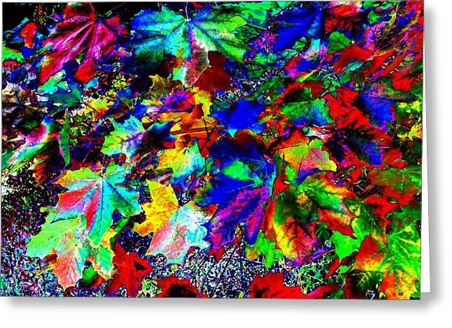 Photos Of Autumn Greeting Cards - Riot Of Color Greeting Card by Will Borden