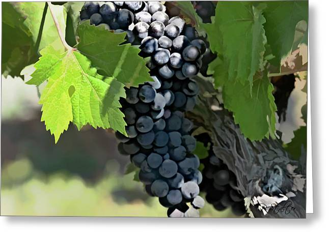 Blue Grapes Greeting Cards - Ripe And Ready Greeting Card by Patricia Stalter