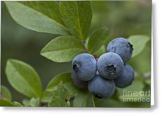 Ripe For The Picking Greeting Card by Kim Henderson