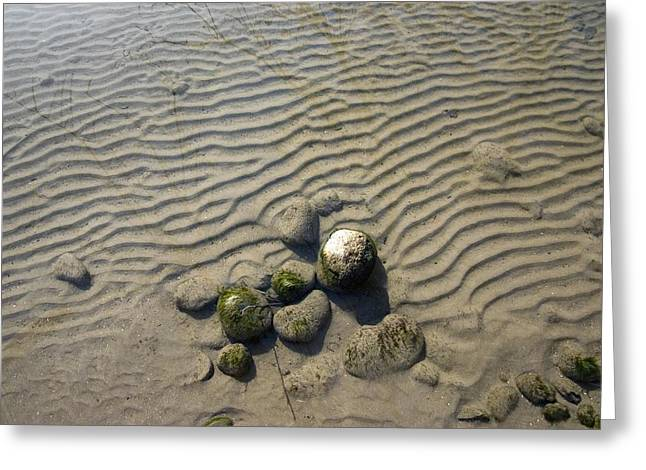 Deposit Greeting Cards - Ripple Marks In Submerged Sediments Greeting Card by Dr Juerg Alean