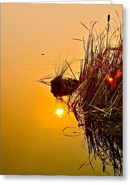 Water Reflecting At Sunset Greeting Cards - Ripples Greeting Card by Cynthia Berg Meakin