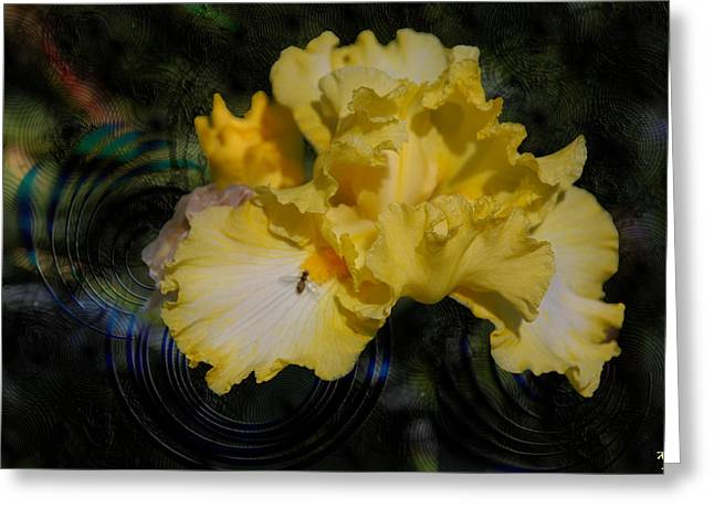 Kelly Digital Art Greeting Cards - Rippling Iris Greeting Card by Kelly Rader