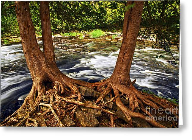 Beautiful Creek Greeting Cards - River and trees Greeting Card by Elena Elisseeva
