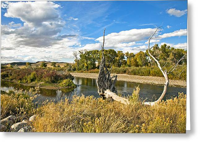 Tree Roots Photographs Greeting Cards - River At Hudson Wy. Greeting Card by James Steele
