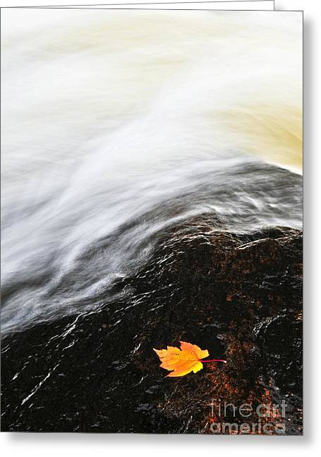 Water Flowing Greeting Cards - River in fall Greeting Card by Elena Elisseeva