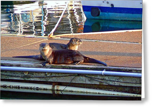 River Otters at the Harbor Greeting Card by Pamela Patch