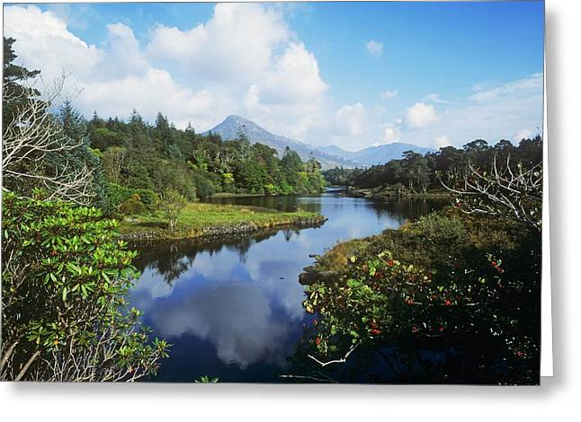 Co Galway Greeting Cards - River Passing Through A Forest Greeting Card by The Irish Image Collection
