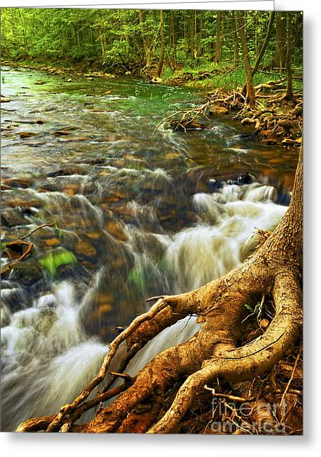 Beautiful Creek Greeting Cards - River rapids Greeting Card by Elena Elisseeva