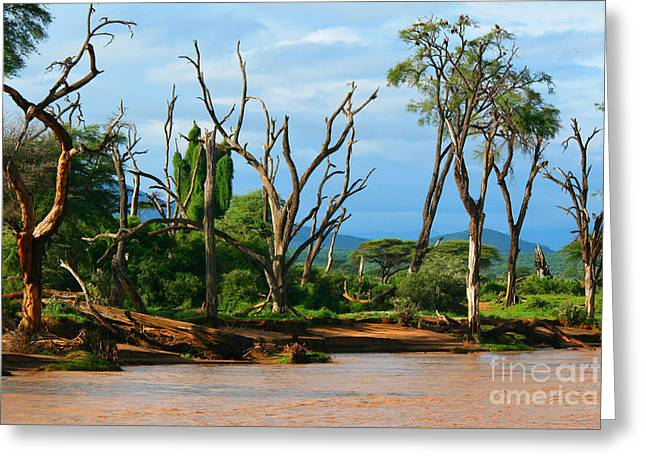 Majestic View Greeting Cards - River side Greeting Card by Anna Omelchenko