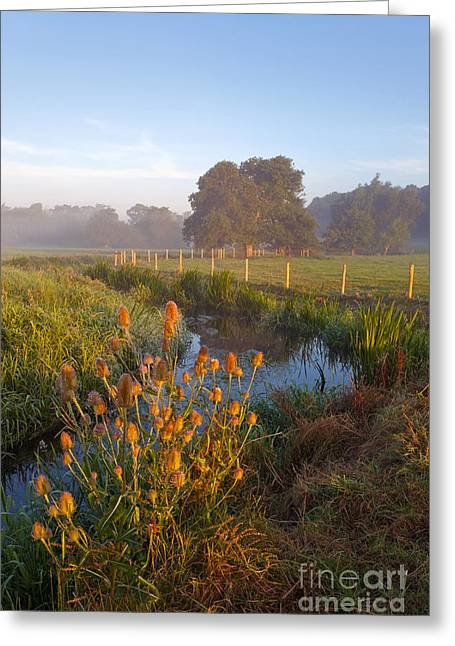 River Mist Greeting Cards - River Wey sunrise Greeting Card by Richard Thomas