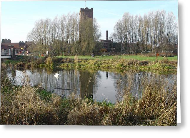 Swans... Greeting Cards - Riverside Walk - Burton on Trent Greeting Card by Rod Johnson