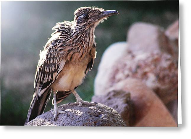 Road Runner Greeting Card by Chelsey Beck
