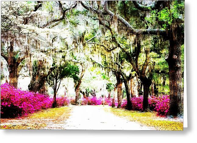 Charlotte Nc Photography Greeting Cards - Road to St. Bonaventure Greeting Card by Diane Payne