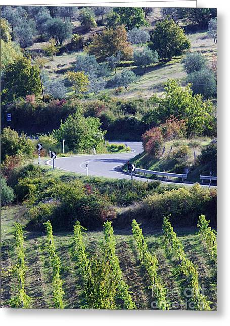 Chianti Greeting Cards - Road Winding Through Vineyard and Olive Trees Greeting Card by Jeremy Woodhouse