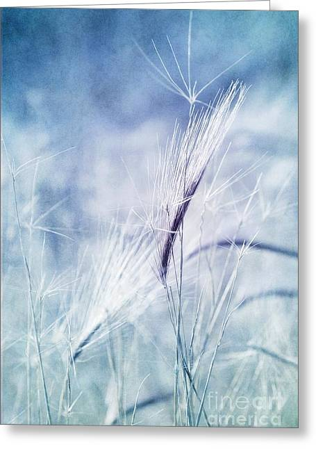"""nature Prints"" Greeting Cards - Roadside Blues Greeting Card by Priska Wettstein"