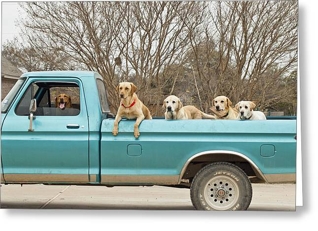 Yellow Dog And Truck Greeting Cards - Roadtrip Greeting Card by Teresa Dixon