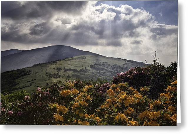 Roan Mountain Afternoon Greeting Card by Rob Travis