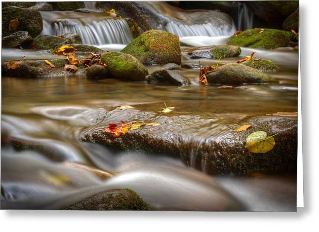 Tennessee River Greeting Cards - Roaring Fork Stream Great Smoky Mountains Greeting Card by Steve Gadomski