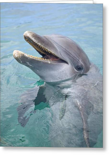 Ocean Images Greeting Cards - Roatan, Bay Islands, Honduras A Greeting Card by Stuart Westmorland