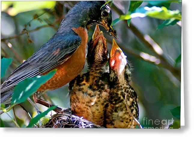 Feeding Birds Greeting Cards - Robin Feeding Young 2 Greeting Card by Terry Elniski