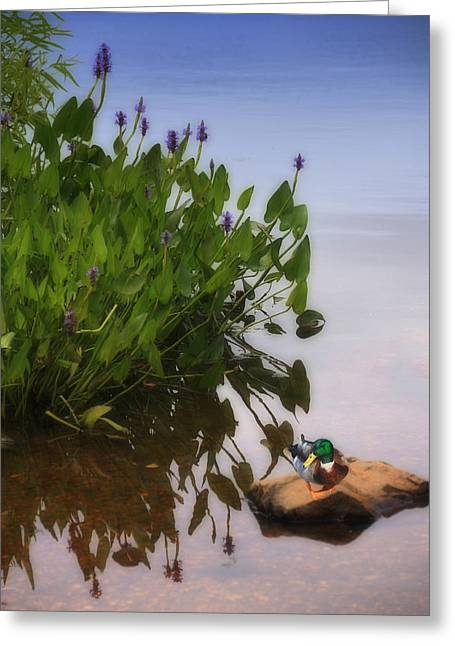 Bird Scape Greeting Cards - Rock Me On The Water Greeting Card by Tom York Images