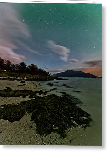 Sortland Greeting Cards - Rock with dinoflagellates Greeting Card by Frank Olsen