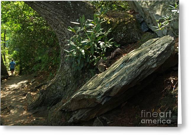 Chimney Rock North Carolina Greeting Cards - Rocks and Rhododendron at Chimney Rock Greeting Card by Anna Lisa Yoder