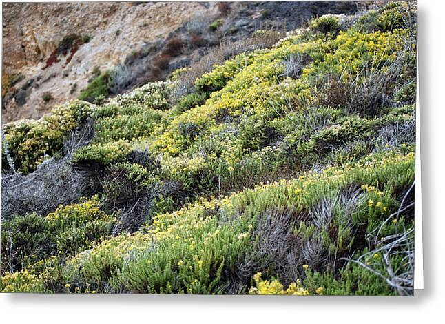 Point Lobos Greeting Cards - Rocks and Wildflowers Greeting Card by Harvey Barrison