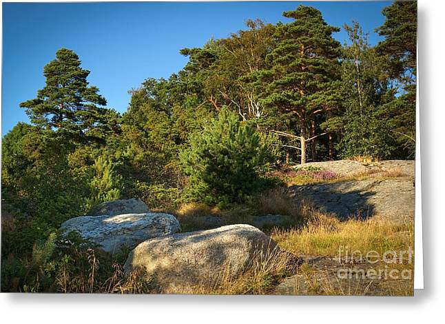Evening Lights Greeting Cards - Rocky Forest Scene Greeting Card by Lutz Baar