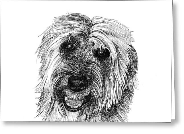 Dog Owner Drawings Greeting Cards - Rocky Greeting Card by Jack Pumphrey