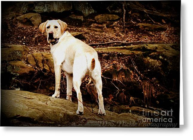 Rocky Greeting Card by Melissa Nickle