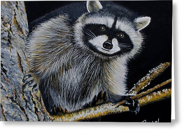 Raccoon Paintings Greeting Cards - Rocky Raccoon Greeting Card by Ferrel Cordle