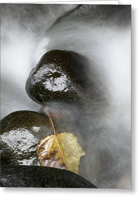 Jenna Greeting Cards - Rocky Riverbed and Leaf Greeting Card by Jenna Szerlag