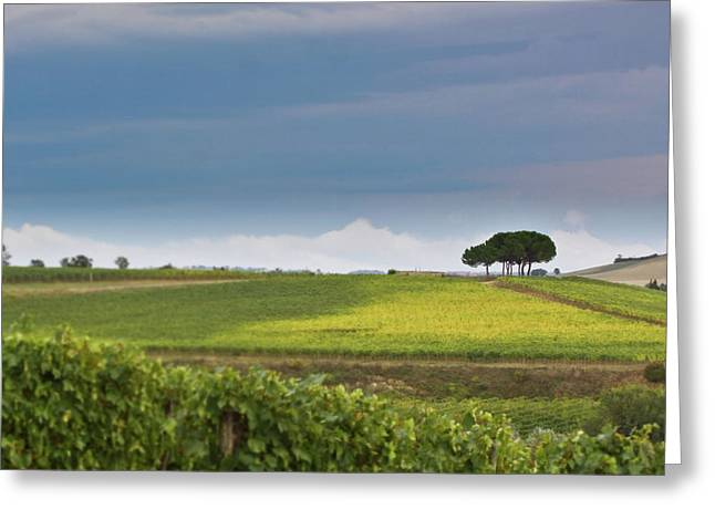 Italy Greeting Cards - Rolling Tuscany 2 Greeting Card by Patrick English